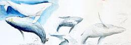 Tomas visionneau baleine news